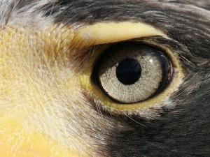 [Image: eagle-eye.jpg]